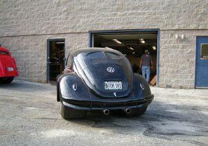 Beetle (17)